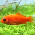金魚の病気について原因や最新治療法を大公開!あらゆる病気に効果がある!