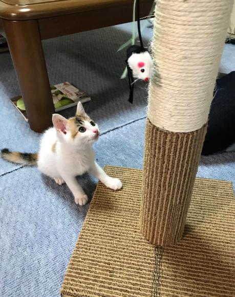 トイレ 以外 で うんち 猫